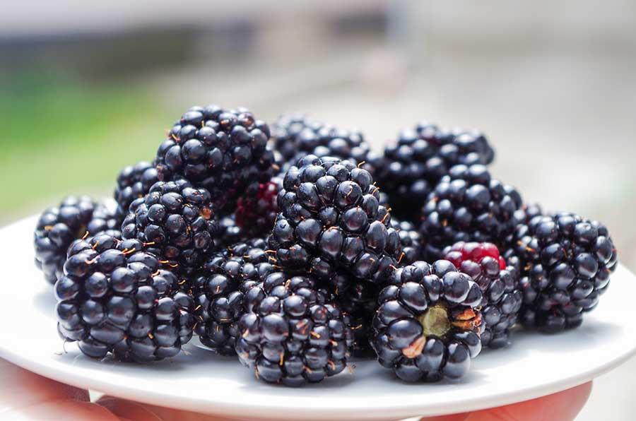 blackberry sauce