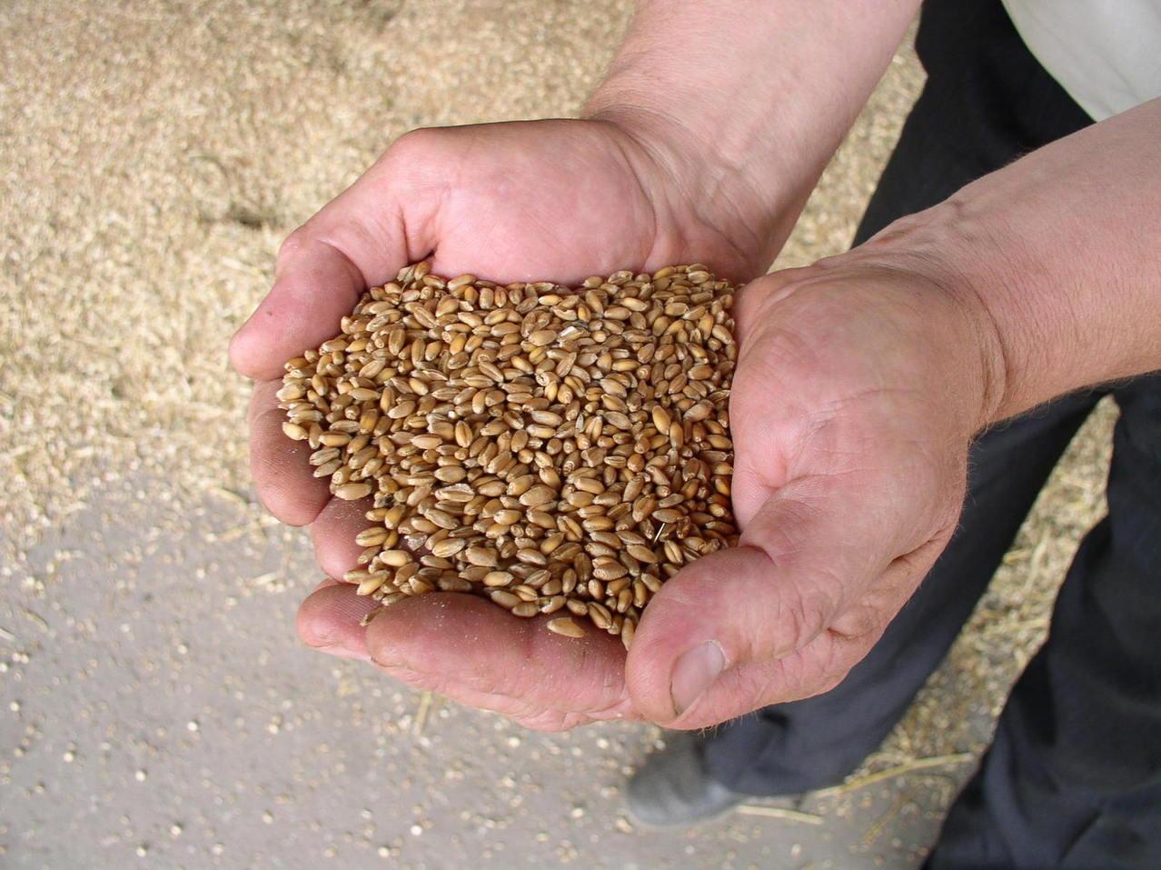 wheat and gluten-free diet